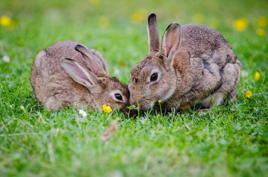 Bunny Sighting!