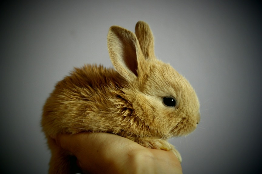 Bunny Sighting